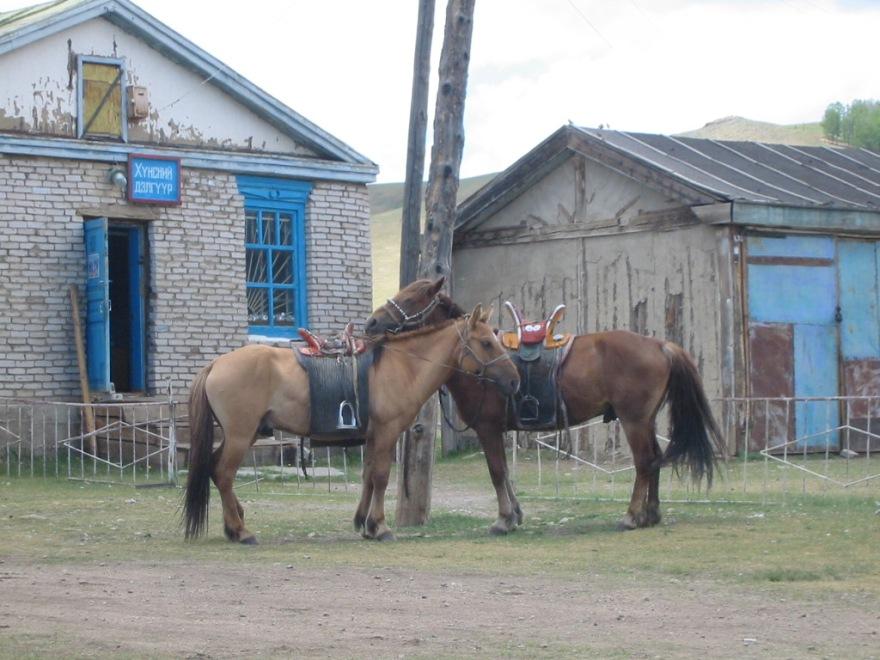 5 horses in Bulgan cym